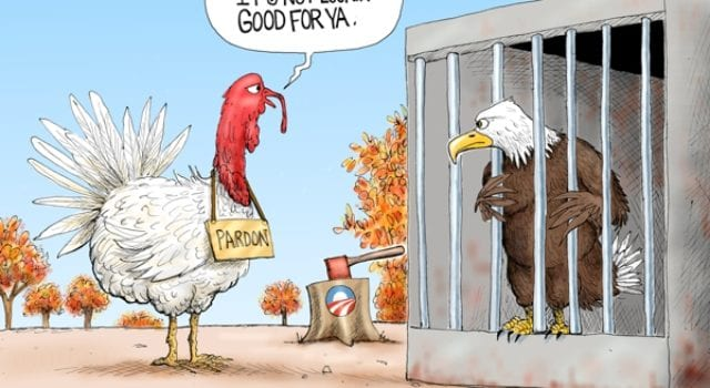 Turkey, Eagle, Pardon, Thanksgiving