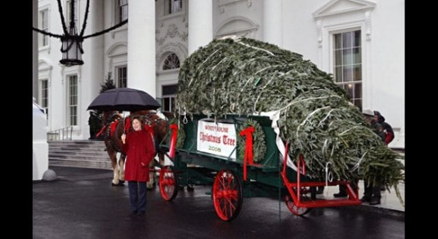 White House Christmas Tree, Laura Bush