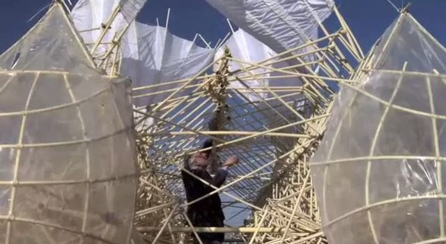 Dutch Artist, Strand Beech Kinetic Sculptures, Video Still