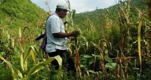 Belize farming